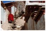 lama w drodze do domu (Kardz/Ganzigompa)